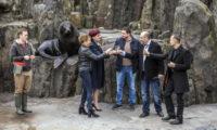 87. hlavní sezónu Zoo Praha symbolicky zahajoval také lachtan Meloun, syn Gastona, který zahynul během povodní 2002.