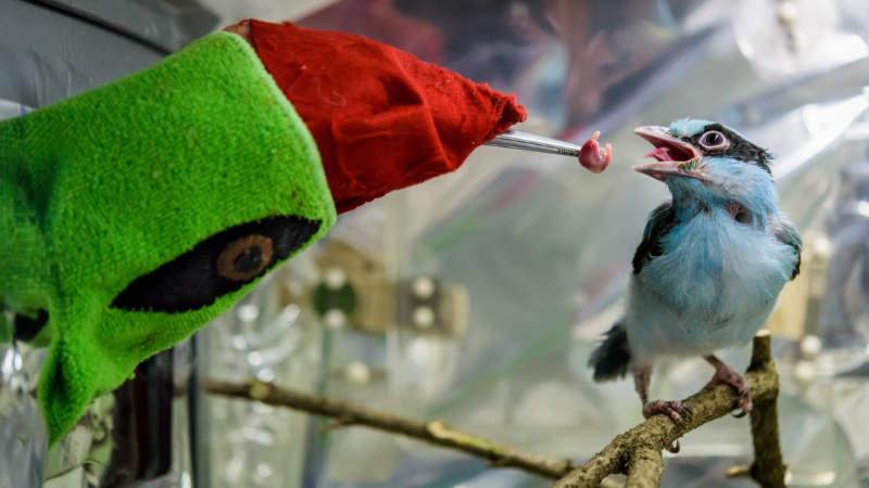 Maminky a velké ptáky