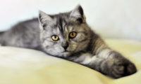 Kočky jsou méně náročné, ale oddanost od nich čekat nemůžete.