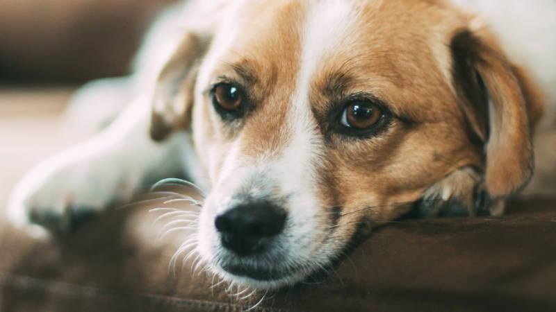 Ne každý pes zvládá samotu.