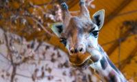 O víkendu se přijďte ohřát do Zoo Praha!