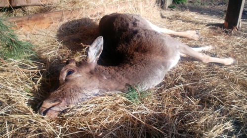 Nezodpovědnost návštěvníků stála život nevinné zvíře.