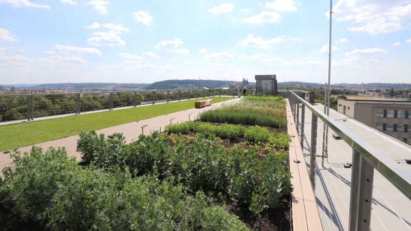 Zemědělské plodiny na střeše muzea.