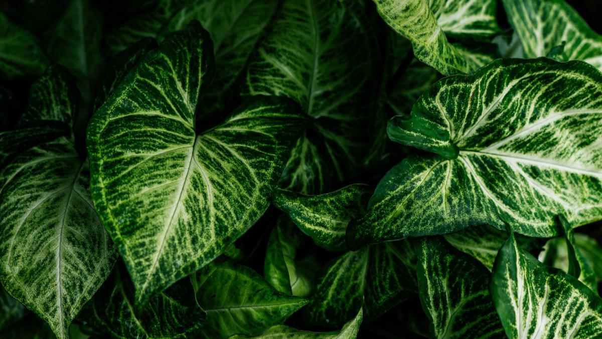 Jedovaté rostliny